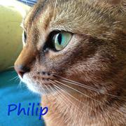 ゆるねこフィリップ