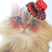 ☆犬猫様の手作りご飯・生食&ホリスティックライフ☆
