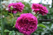 mme roseさんのプロフィール