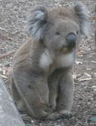 オーストラリアでバイリンガル子育て