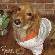 おしゃれな犬服&アクセサリーのお店 クーチャブラウニック 店長ブログ