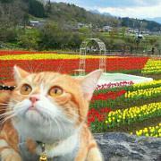 猫と私〜ジャックとまめの木〜