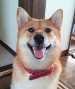 堺市市長選挙 重要なお知らせです