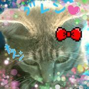 愛猫、保護猫ブログ