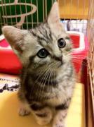 僕って猫なの?