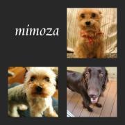 mimozaののほほんな日々