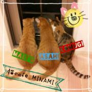 猫cafe MINAMI