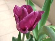 私色の日々〜まことの花が咲くように〜