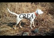 setter CREA