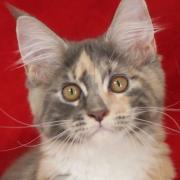猫と暮らす築23年の家をDIYでプチリフォーム