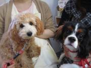 美幌動物病院 スタッフブログ