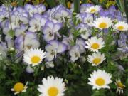 私の庭と布の時間 〜癒しの時〜