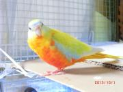 ♪鳥と暮らす♪