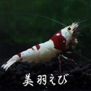 美羽えび  〜miwaebi〜