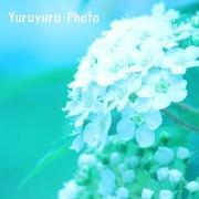 Yuruyuru Photograph