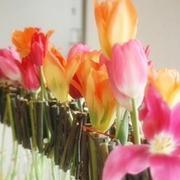 オランダで見つけよう、花ひらけ私!花&テーブル