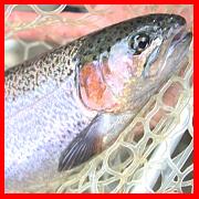 管理釣り場でトラウトルアーフィッシングを楽しもう!