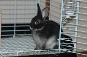 神山ウサギ