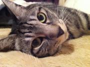 〜猫と暮らす賃貸‼ 1からDIY〜