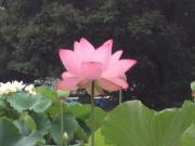 Lotus(禁酒中)のブログ