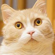 よねっちのほぼ猫日記