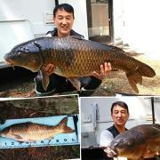 ナニワの鯉しぐれ