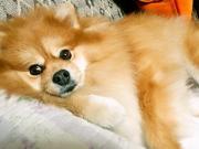 メイリン愛犬沖縄日記