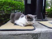 yukako-michi