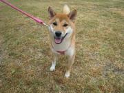 和楽飛もちの愛犬と資格のブログ