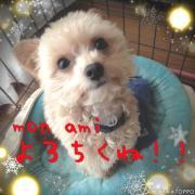 mon ami 〜チワプー気まぐれ日記〜