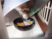 犬のきもち・手作りごはん ミルキーのブログ