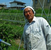 自然栽培のタンポポ農園
