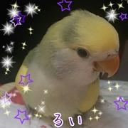 ラブバDiary☆*:.。. .。.:*☆☆*