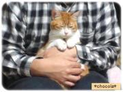 低収×無職×猫