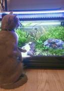 魚と猫との暮らし