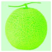 Neon Melon