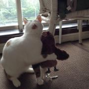 毒舌猫様と飼い主の日常