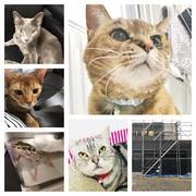4匹4色4にゃんず。猫と快適に暮らす家づくり