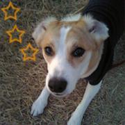 元保護犬「りく」の日々