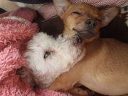 愛犬は友さんのプロフィール