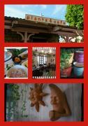 plants&cafe