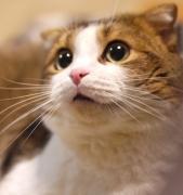 猫とダーツの日々 第3章