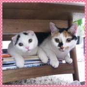 みけしとすこしの猫日記 〜三毛猫と僕、ときどき嫁〜