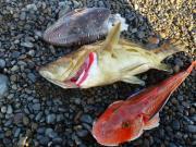 カイザーo(`・ω´・+o)今日も海で遊ぶ