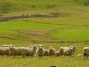 ニュージーランド 旅行 観光 動画で紹介のブログ