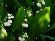 『のんびりと』 Norの花と いろいろと