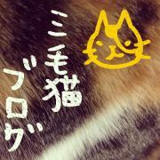 京都散歩 日々の出来事と三毛猫ブログ