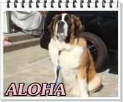 愛犬アロハと楽しい生活記録