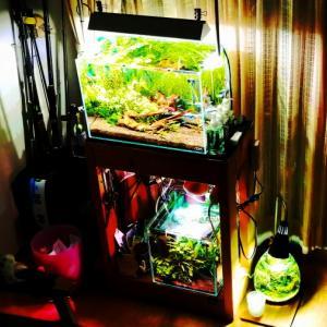 ☆yamann aquarium☆