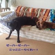 Free&Sunny日記